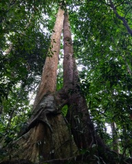 Spooning trees?