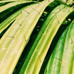 Dreams do Come True: Tropical Ecology Research in Borneo!